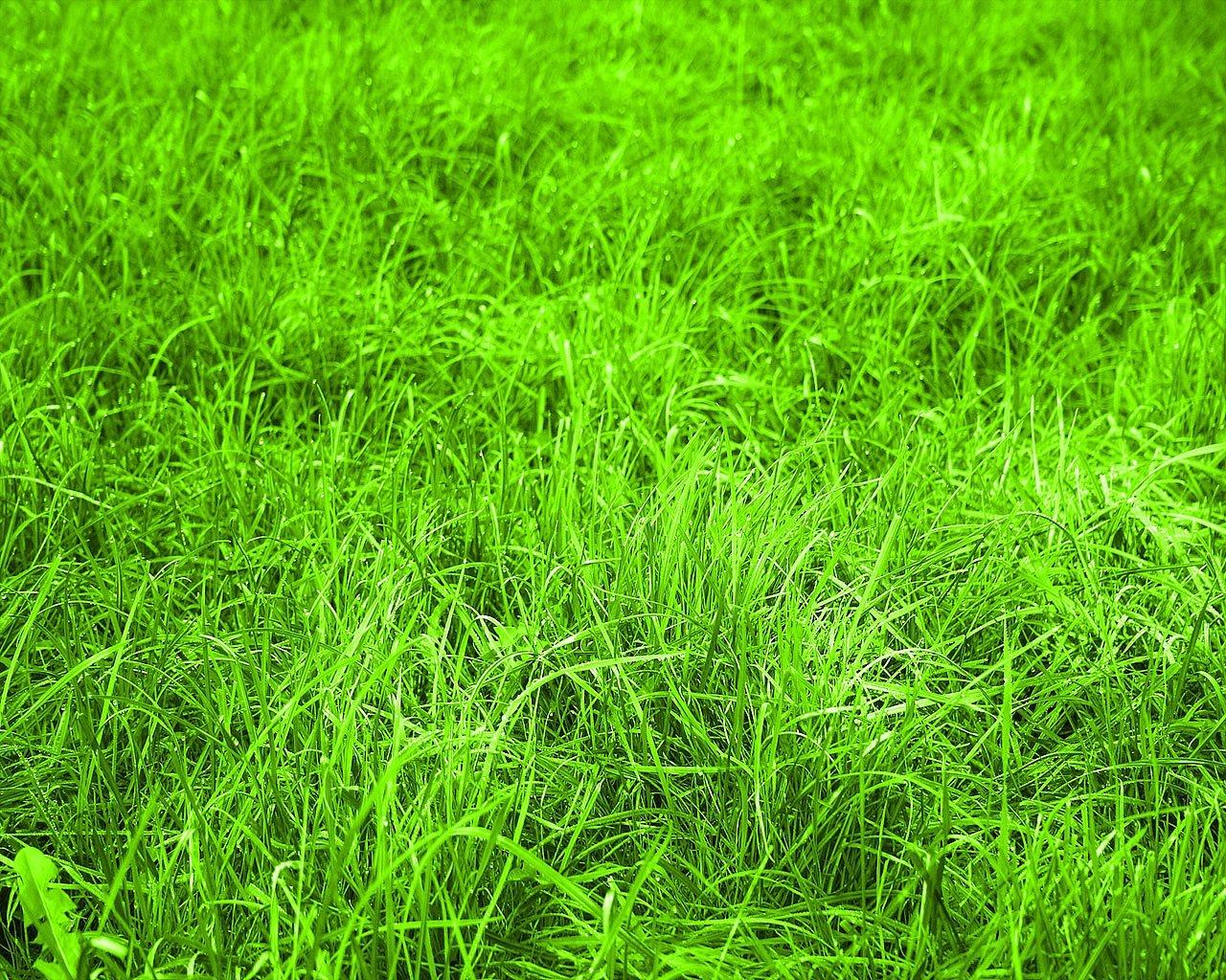 Got grass