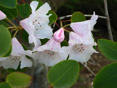 200407 flowers