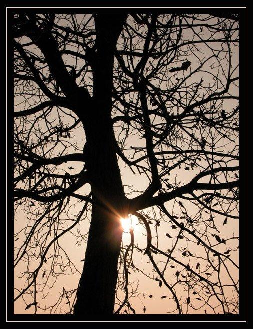 [albero+tramonto.bmp]