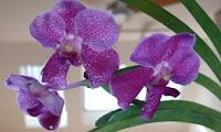 Bonnie's Blurbs: Orchids Dead, Orchids Live
