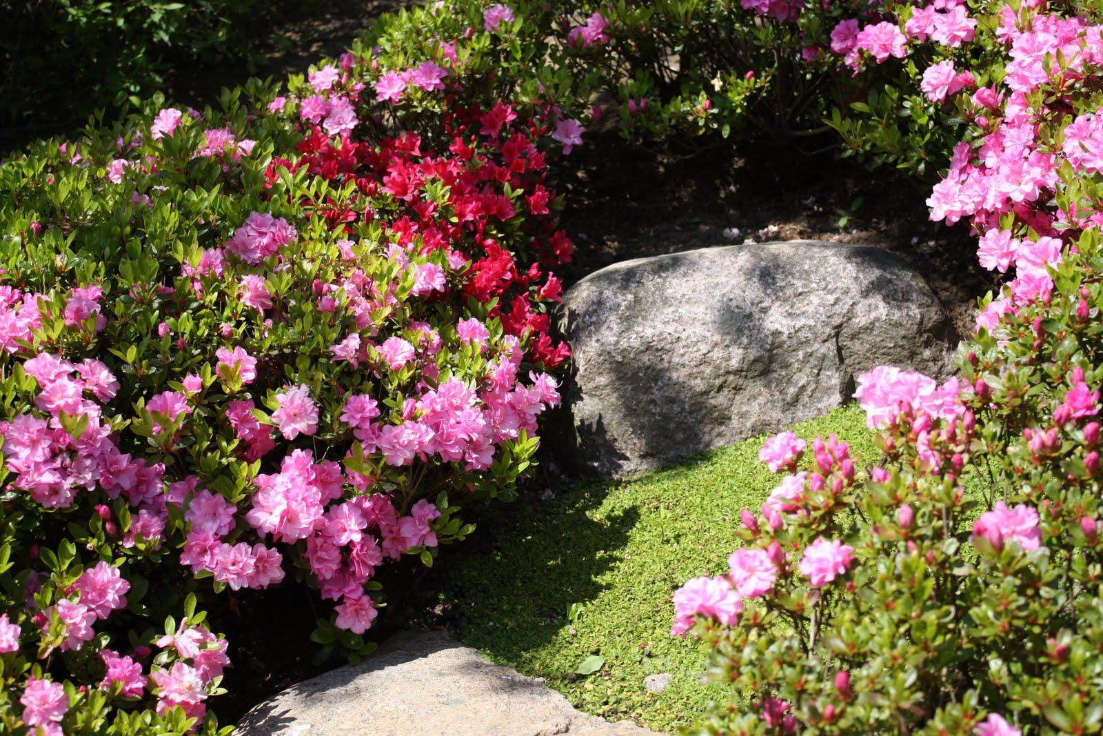 japanske haver på fyn