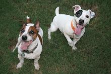 Winston and Roscoe