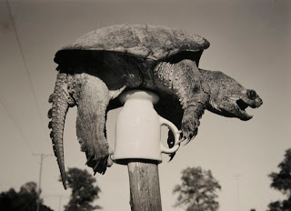 Robert Langham Post Turtle Southern Snapping Turtle On