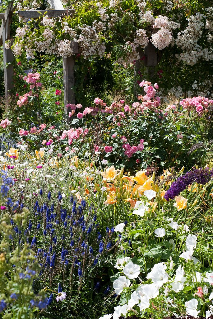 .Lilac Lane Cottage: Garden Dreaming