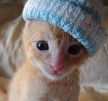 adorable-kitten.jpg