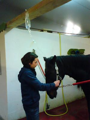 ocalis, veterinaire equin, thiriez