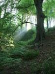 redburn woodland