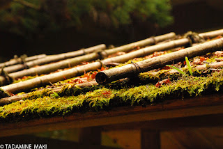 Mosses on the wooden roof at Kouzanji Temple, in Kyoto