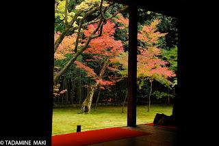 A garden in autumn, in Koto-in of Daitokuji Temple, in Kyoto