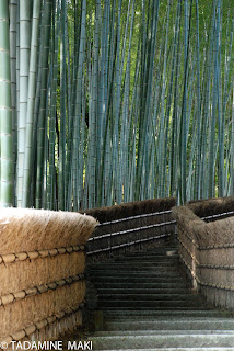 Another bamboo path at Adashino-nenbutsuji Temple, in Kyoto