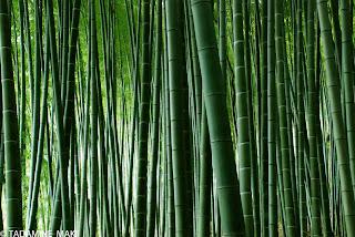 The rhythm of the nature at Kedashino Nenbutsuji Temple, in Kyoto