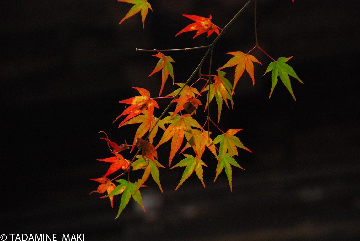 [080116kyoto.JPG]