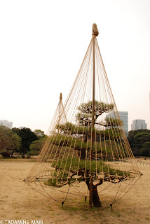 Ropeworks to protect pine trees from snow, Kyoto