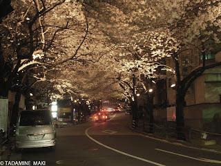 Sakura at night