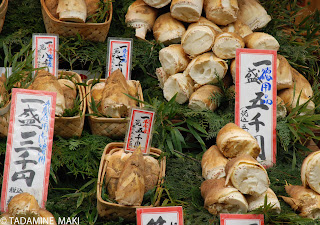 Takenoko, a bamboo shoot, Kyoto
