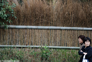 Bamboo fence 2, Kyoto
