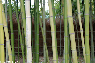 Green of bamboo