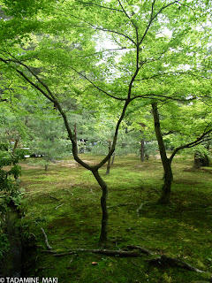 The natural green of leaves and mosses welcomes us, Kinkakuji Temple, Kyoto