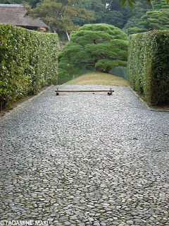 a pine tree at the end of the paved path, Katsura Imperail Villa, Kyoto