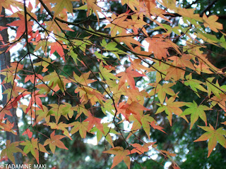 Autumn is coming... at Saihoji Temple in Kyoto