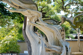 The power of old and new, the essence of Bonsai