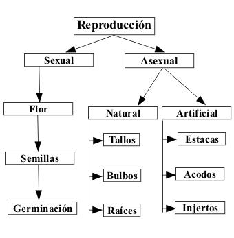 Reproduccion asexual en plantas mapa conceptual de los valores