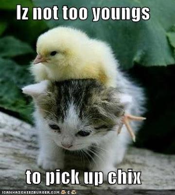kitten lol