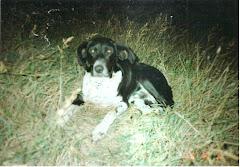 Av köpeğim