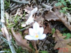 Kasım ayında çiçekler