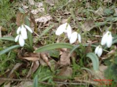 Baharın müjdecisi çiçekler