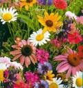 Per te Pupina: tanti fiori colorati