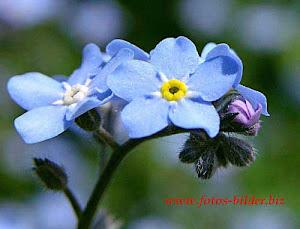 notte occhi blu