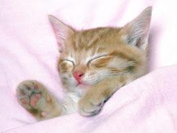 Buona notte, buona notte fiorellino.....!!!!