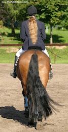 Coda...di...cavallo..in sintonia!!!!!!!!!