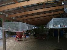 Quail Barn 1