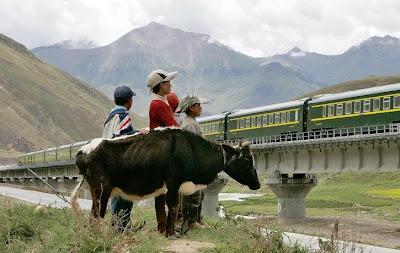 train tibetain
