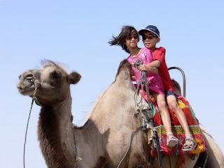 le chameau de chine