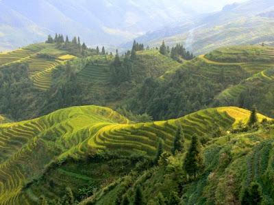 rizieres en terrasses de Longji Chine