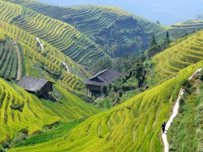 rizieres en terrasses Chine