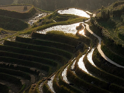 rizieres en terrasses Longji et Ping'an