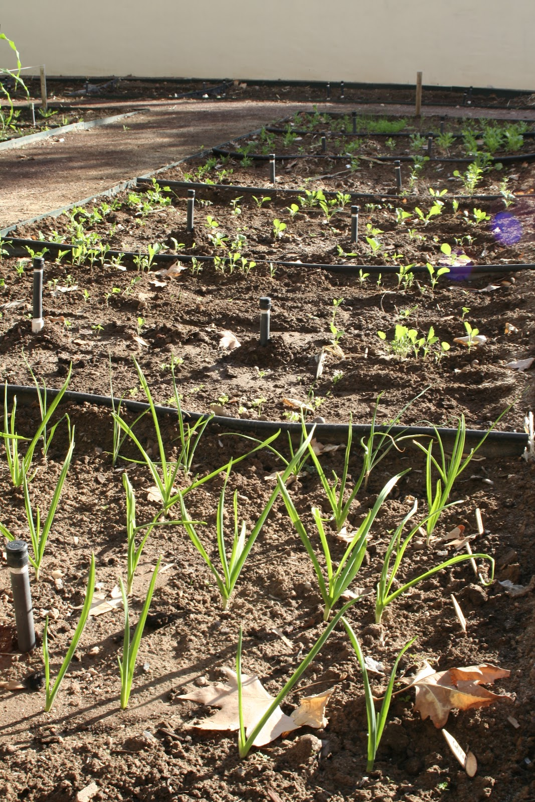 Practical Biology: science for everyone: January garden economics update