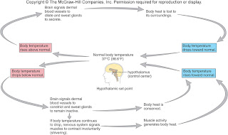 mr zac the bio mentor  when a worker enters a cold room the slight drop in body temperature is detected by the hypothalamus when blood is transported to the brain 1