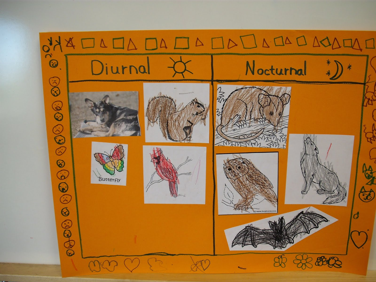P Riddle S Class Blog Rm C 11 Nocturnal And Diurnal Animals