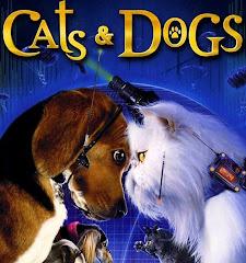 catsydogs