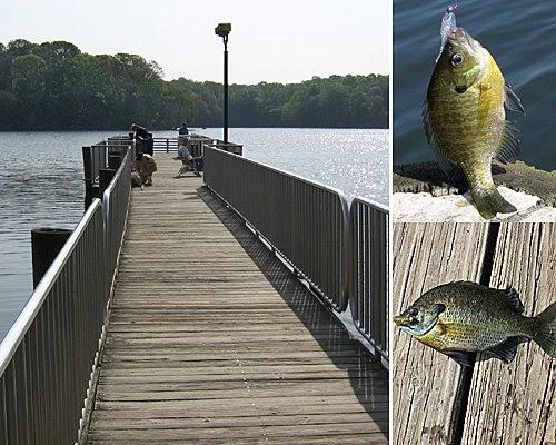 The first time fisherman burke lake va fishing has started for Burke lake fishing