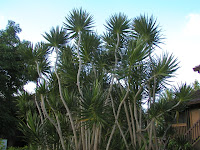 one palm tree of many types