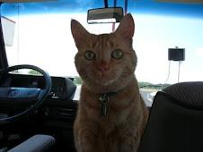 Orangey Cat