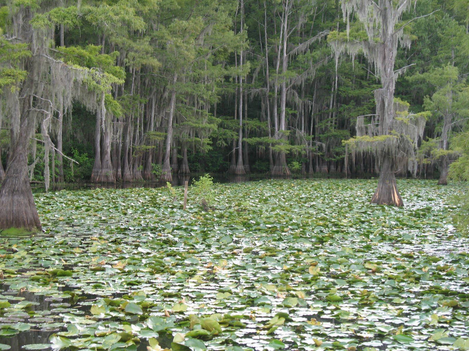 Texas Home Mika S Adventures Aventuras De Mikael Lago Caddo Texas