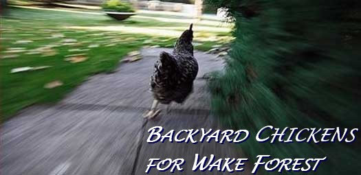 Backyard Chickens for Wake Forest