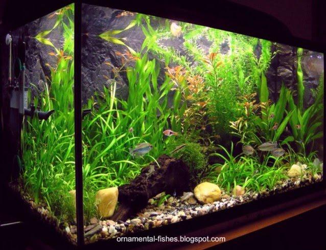 [freshwater+aquarium-.jpg]